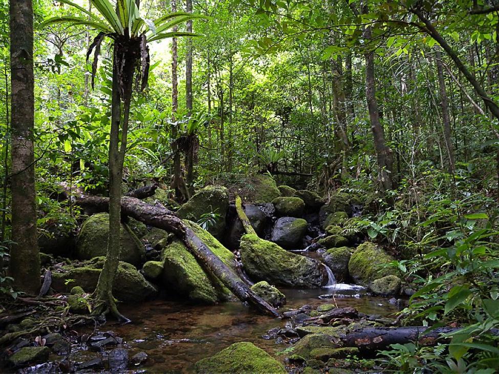 Мадагаскар. Крупнейший национальный парк Масуала