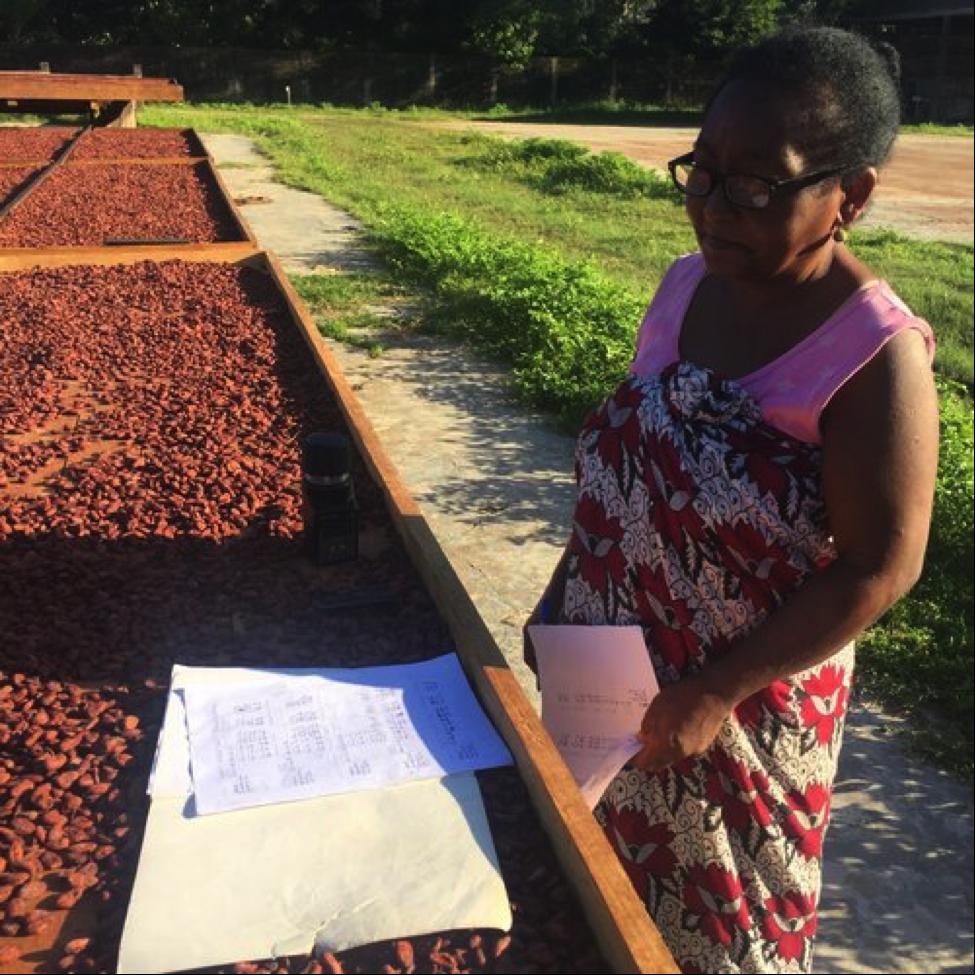 Как выращивают какао-бобы для фабрики Chocolaterie Robert