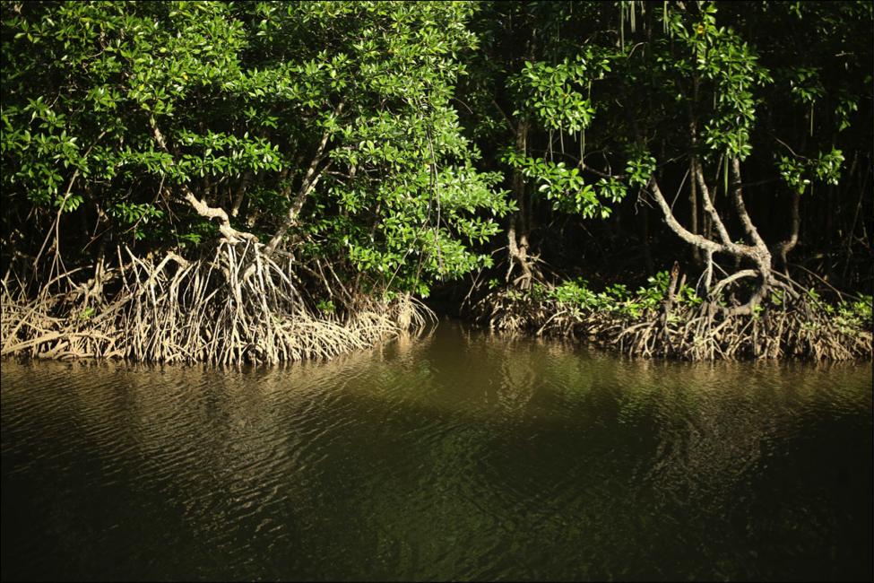 Что посмотреть. Мадагаскарские мангры