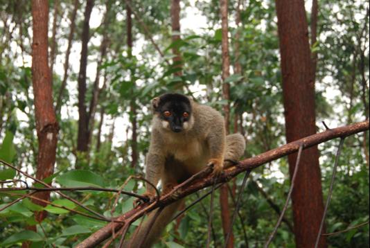 Цинги-де-Бемараха - обязательно для посещения на Мадагаскаре