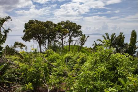Как и когда начали выращивать какао на Мадагаскаре