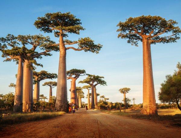 Пять интересных фактов для тех, кто давно хотел посетить остров Мадагаскар