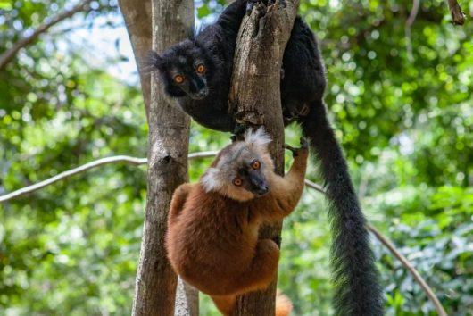 О туризме на Мадагаскаре
