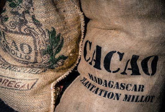 Как собирают какао-бобы