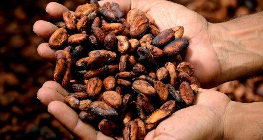 История какао-бобов