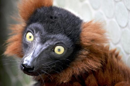 10 животных и птиц, которые есть только на Мадагаскаре
