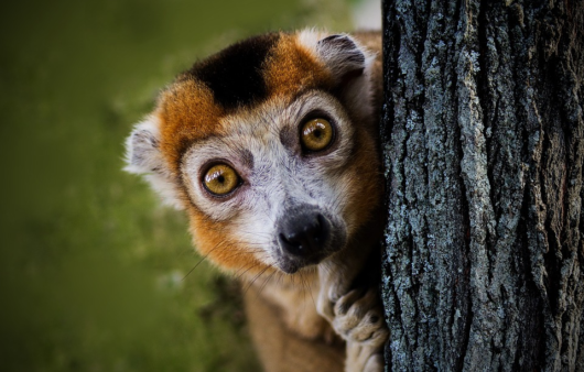Чудеса флоры и фауны Мадагаскара