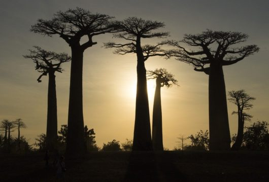 Мадагаскар: рекорды в мире природы